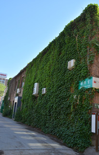 北京798街区藤蔓满墙