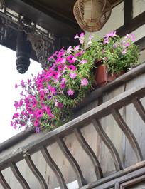 阳台盛开的喇叭花