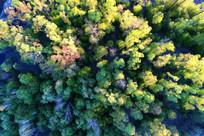 彩色树林风景航拍