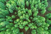 绿色松林风景航拍