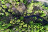 森林中小溪景观航拍