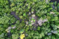 树林风景航拍