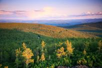 夕阳照射下的林海树林
