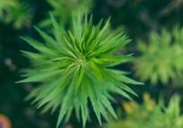 绿色植物俯拍特写