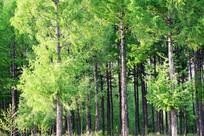 绿树林风景
