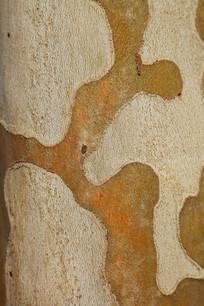 树皮纹理背景素材