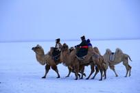 雪原骑骆驼的蒙古牧民