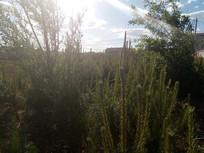 光中的植物图片