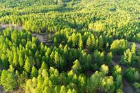 航拍松林风景