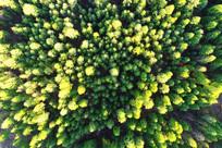 林海松林风景 航拍
