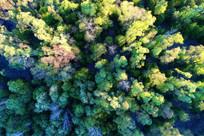 树林风景 航拍