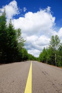 通往森林的公路