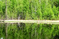 湖泊绿树林