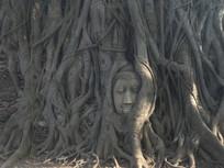泰国大城被树根盘绕的佛头