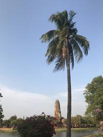 泰国寺庙椰子树