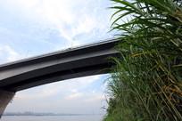 武汉二桥的芦苇