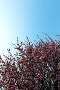 樱花盛开的春天