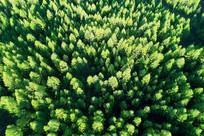 林海松林风景航拍