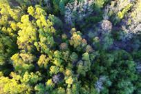 美丽的树林风景航拍