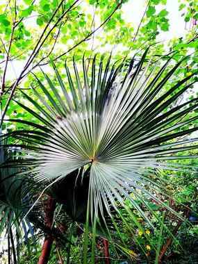 漂亮的棕榈叶子