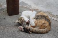 酣睡中的可爱猫咪