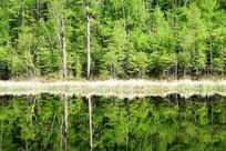 湖岸绿树林