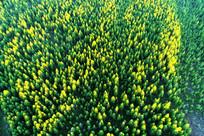 绿色林海航拍
