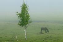 晨雾迷漫的牧场风景