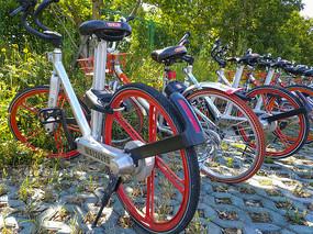 花丛中共享单车