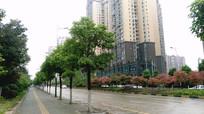 清镇红枫北路绿化和高楼
