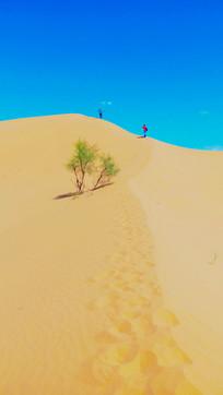 登上沙漠主峰