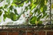 屋顶上的小猫
