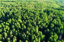 绿色林海 航拍