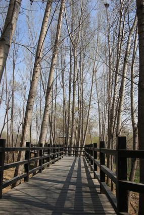 麋鹿苑木栈桥