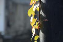 爬在木柱上的花草