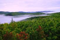 美丽的森林之雾