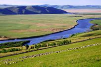 牧场河湾羊群