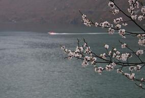 杏花与湖水