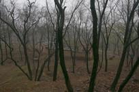 杂树丛中的老房子