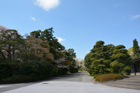 道路景观树木