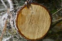森林木材砍伐