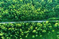 穿越茫茫林海松林的山路 航拍