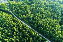 穿越茫茫绿色林海的山路 航拍