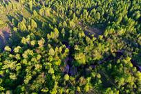 穿越松林弯曲的小溪 航拍
