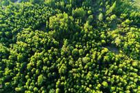 林海松林景观 航拍