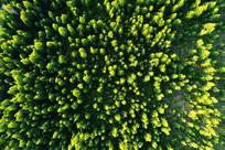 茫茫林海绿色森林 航拍