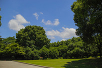 森林绿树蓝天