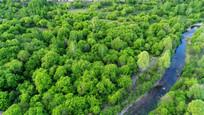 树丛小溪景观 航拍