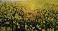 松林景观 航拍