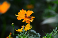 彩花的蜜蜂